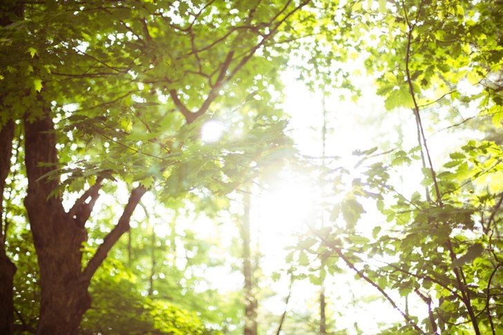 Pin for Later: 18 Fun Things You Need to Do This Summer Read a book in a forest. Pack up your favorite novel, along with a can of bug spray, and head to the woods. The Summer reading experience will feel even more magical.