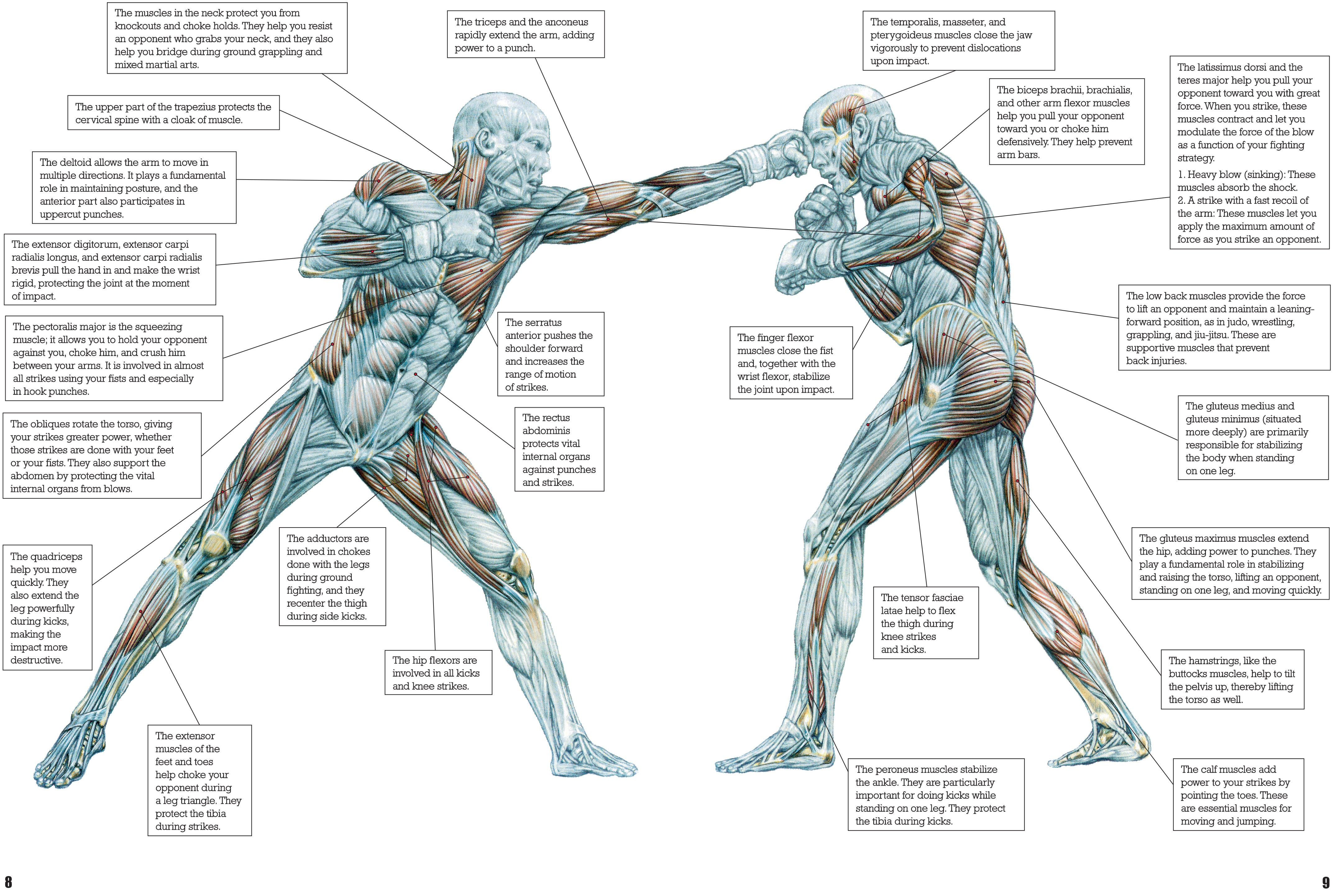 frederic delavier strength training anatomy Print | Martial Arts ...