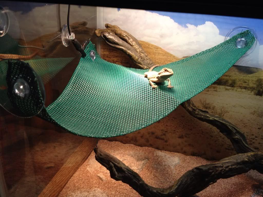 Save money on your reptile habitat.