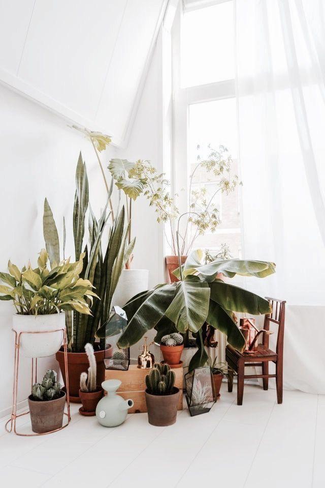 Corner Plant collection