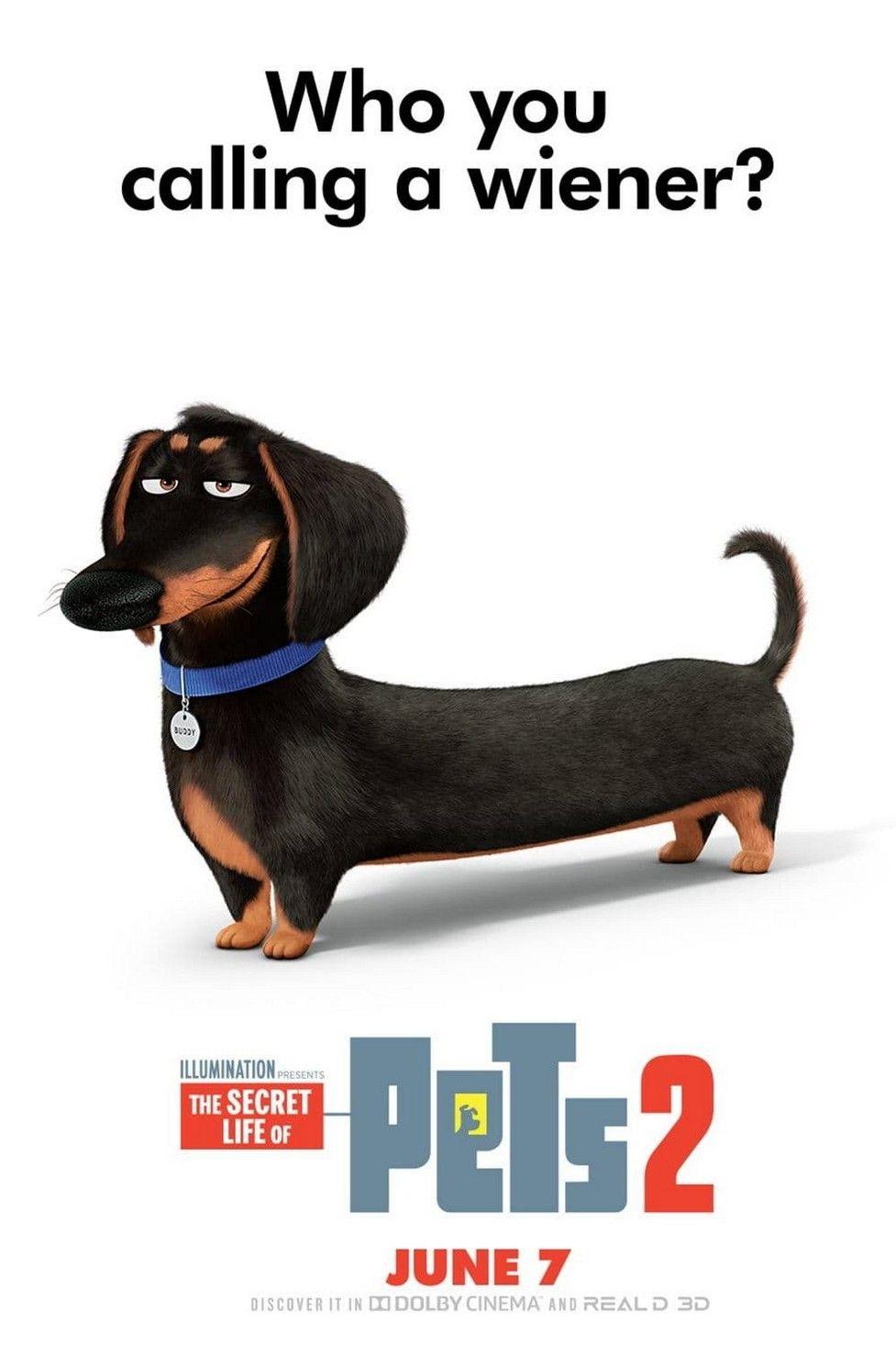Ver Pelicula Completa De The Secret Life Of Pets 2 Mascotas 2