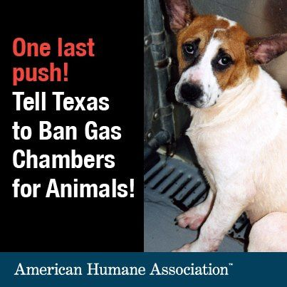 Ban the Gas Chamber! THIS IS SICK, CRUEL, AND INHUMANE! Be the voice for these innocent animals!!