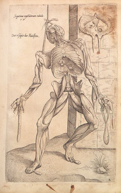 Andreas Vesalius - Anatomical drawings | anatomia by Alexander ...