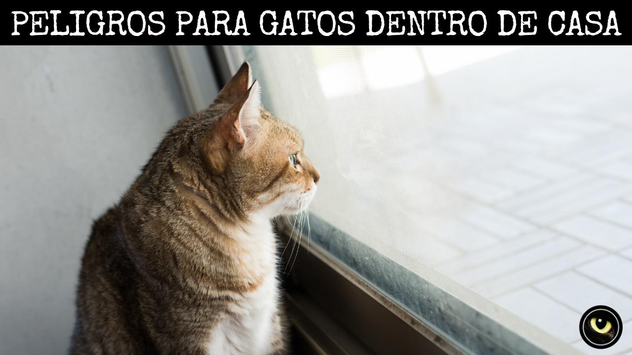 97 Ideas De Gatos En 2021 Gatos Mascotas Gatitos Recién Nacidos