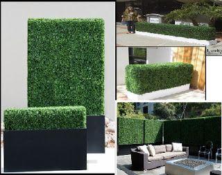 Garden Bamboo Hedge