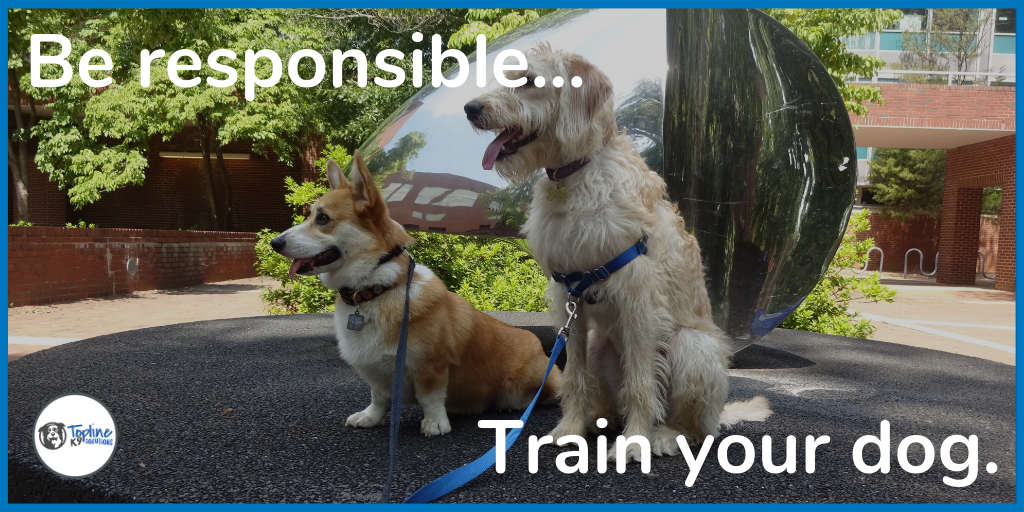 Training Your Dog Is One Of The Most Responsible Things You Can Do As A Pet Owner A Trained Dog Is Less Stressed More Social And Healthier In Gen With Images