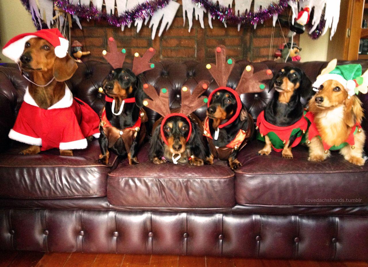 Santa Dox And Eight Tiny Raindogs Dachshund Pet Costumes