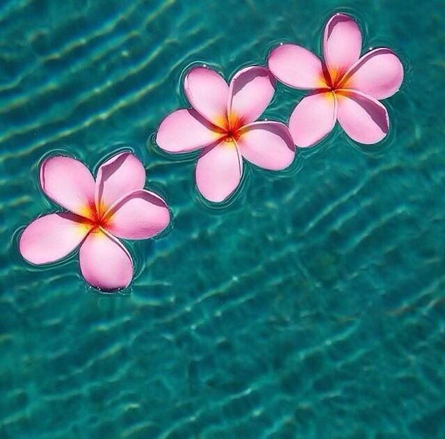 Floating beauty...