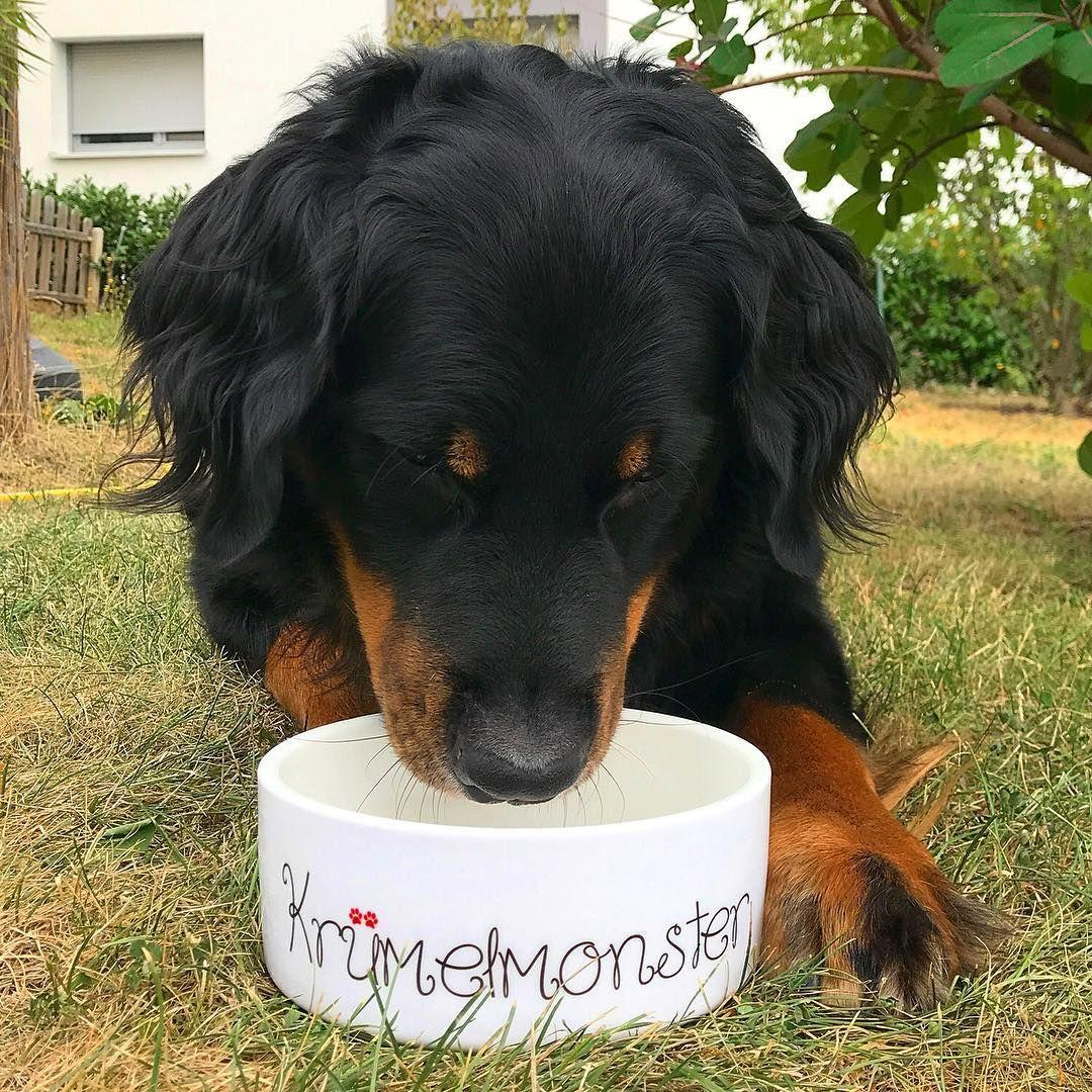 Keramik Futternapf Krumelmonster Futternapf Hundenapf Und Kosenamen