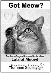 meow  www.sohumane.org