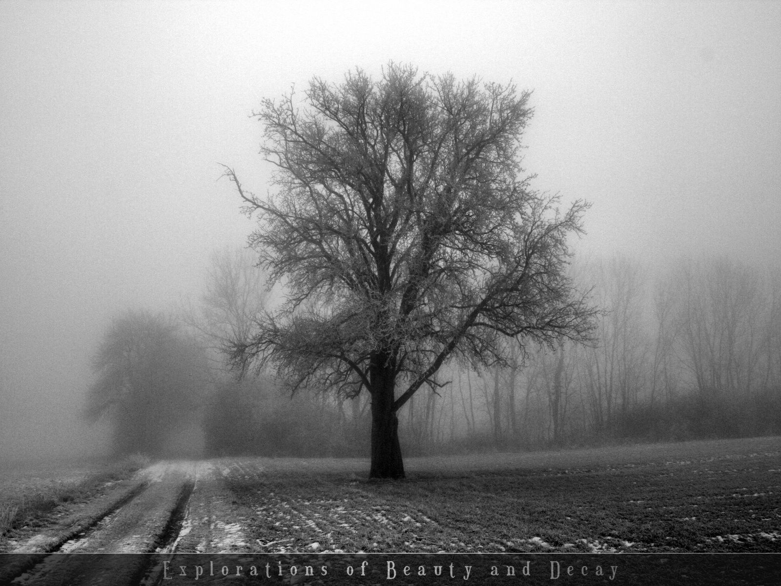 black and white photography | black and white wallpapers
