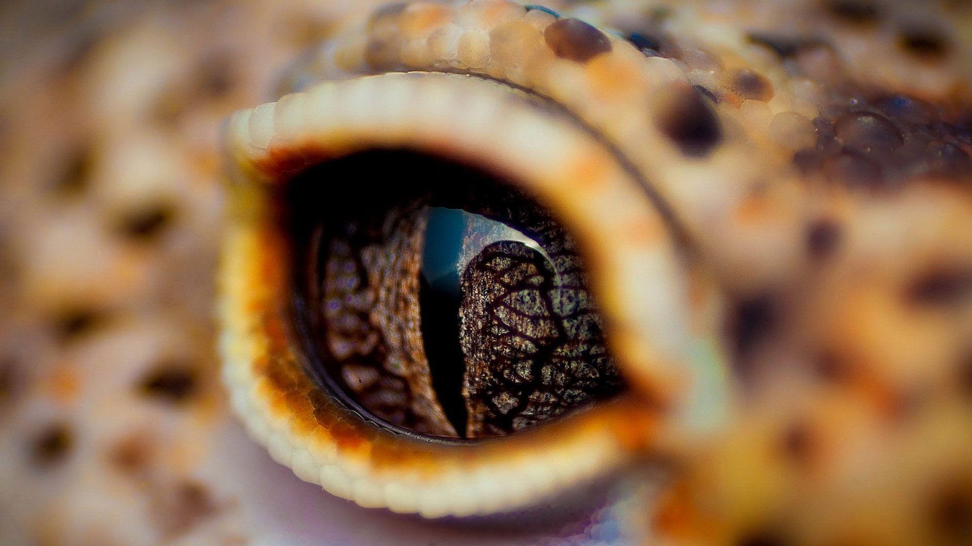 hd pics photos attractive crocodile eye macro animal eyes ...