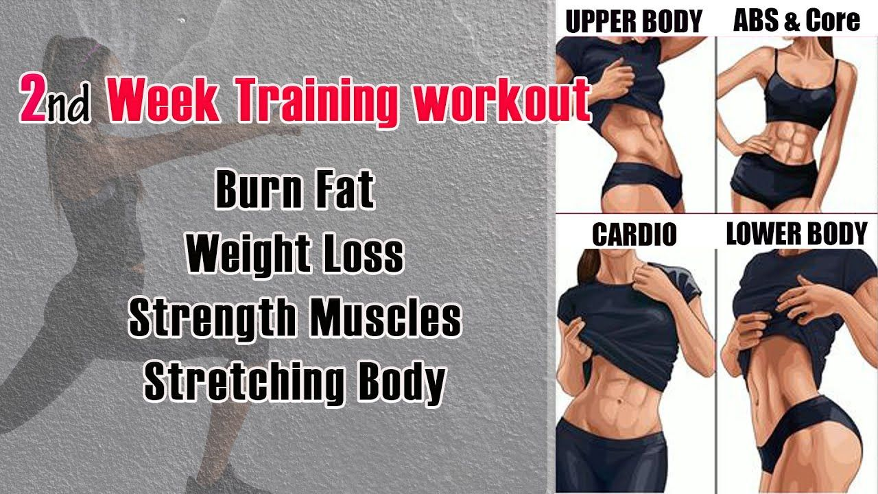 weekly training workout 2 : Lower body | Cardio | Stretching & Flexibility | upper body | ABS & Core
