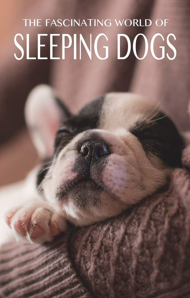 How many hours a day do dogs sleep the happy puppy site