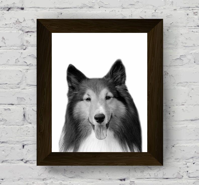 black and white dog, dog print, dog wall art, animal print, shetland sheepdog, dog photography, black and white animal, animal poster di AlemiPrints su Etsy