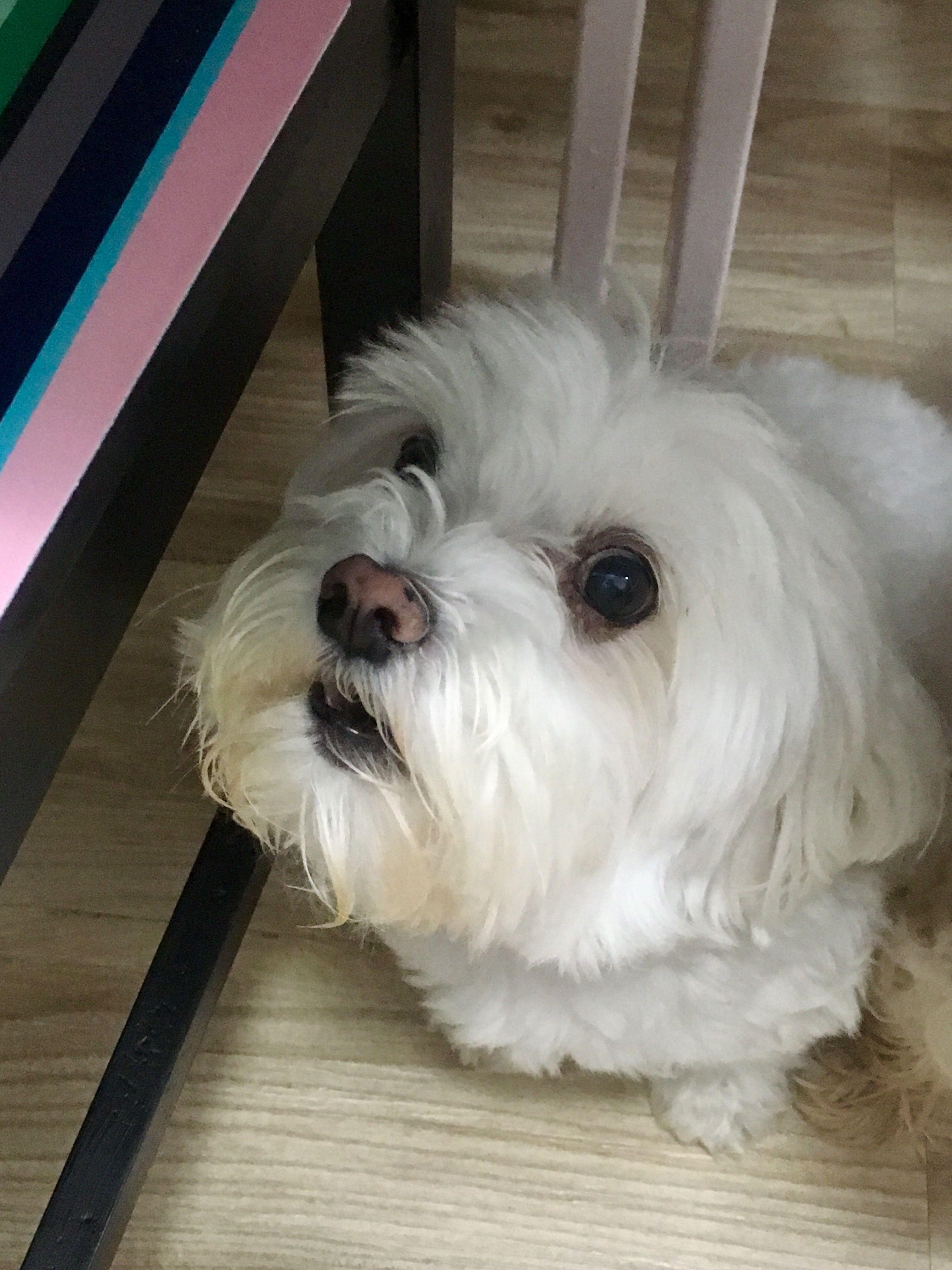 Pin Von Isabela Martinez Jorge Auf Bichinhos Fofos Hunde