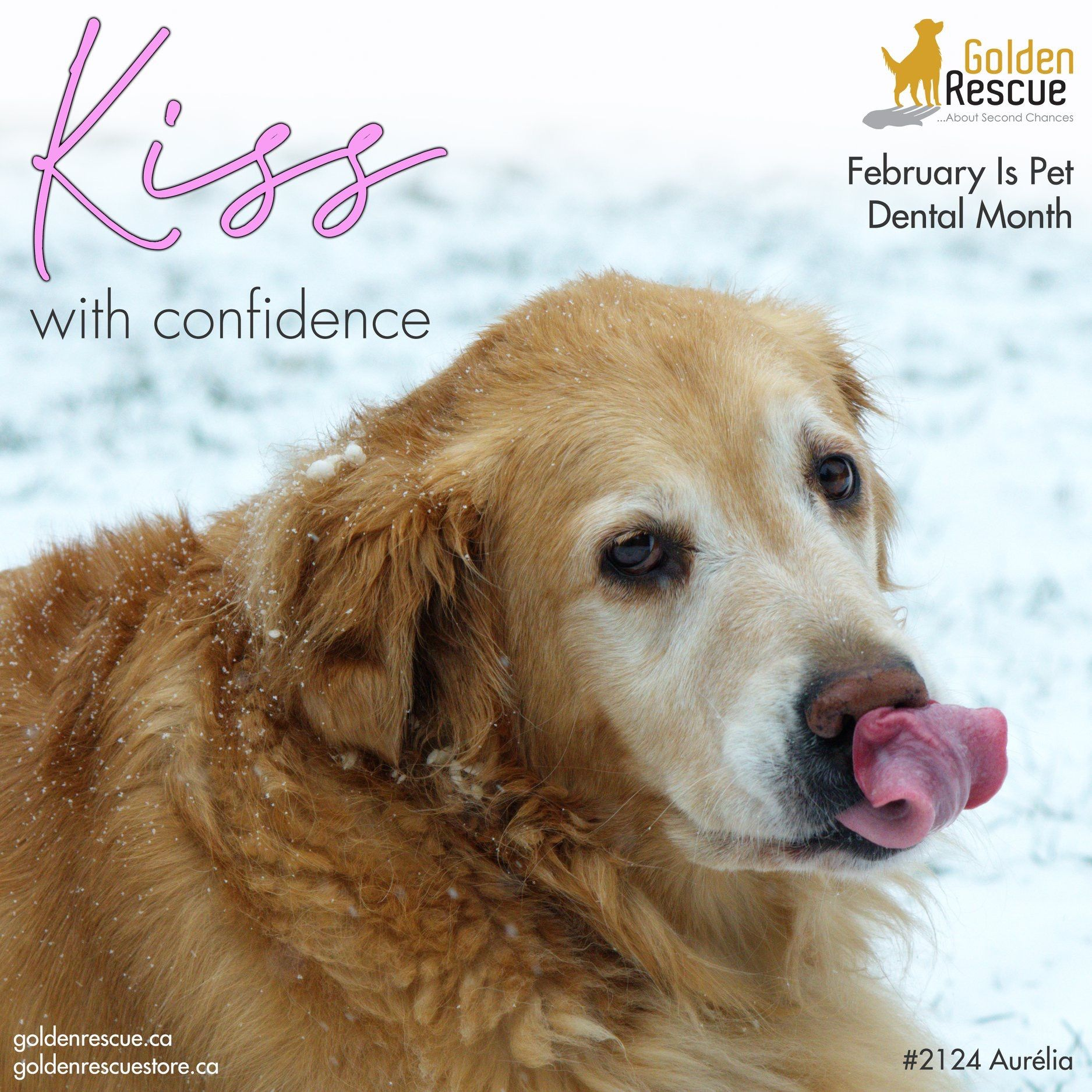 February is Does your dog have bad breath Have you noticed plaque buildup on their teeth Maybe its time you start to take a closer look at your pets dental care routine W...