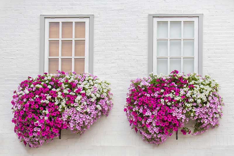 10 Best Flowers for Window Boxes in Shade