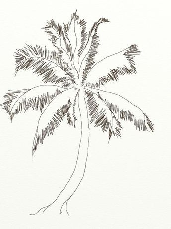 30+ Trends Ideas Sketch Coconut Tree Drawing Images