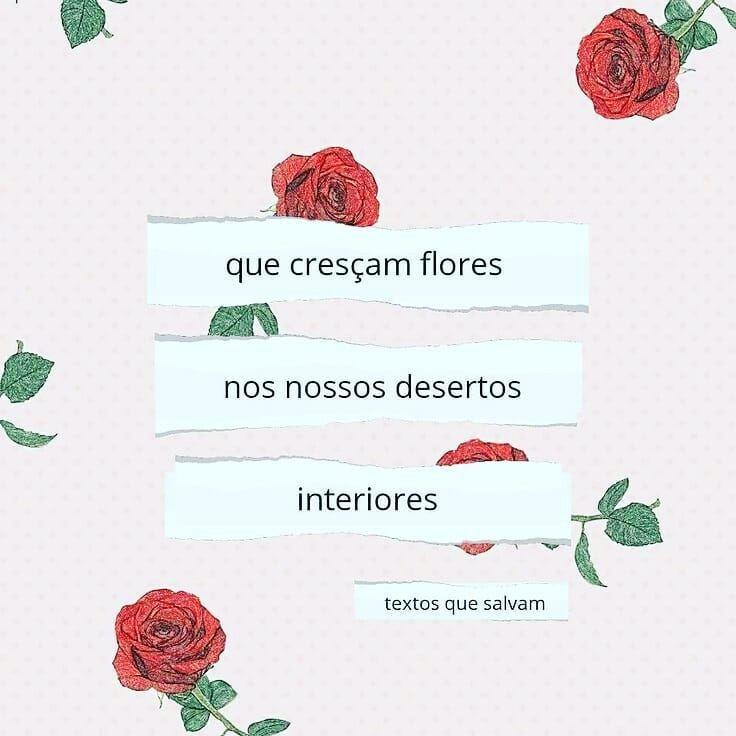 Instablogger Frases Flores Frases Curtas Amor Proprio