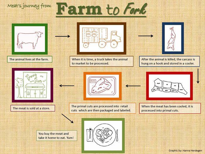 Farm To Fork Beef Farming Farm World Farm