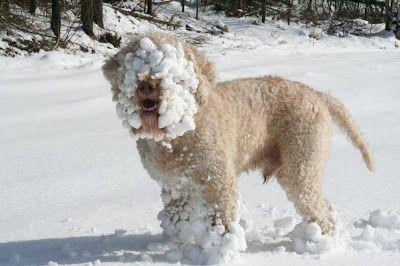 Winter Djur