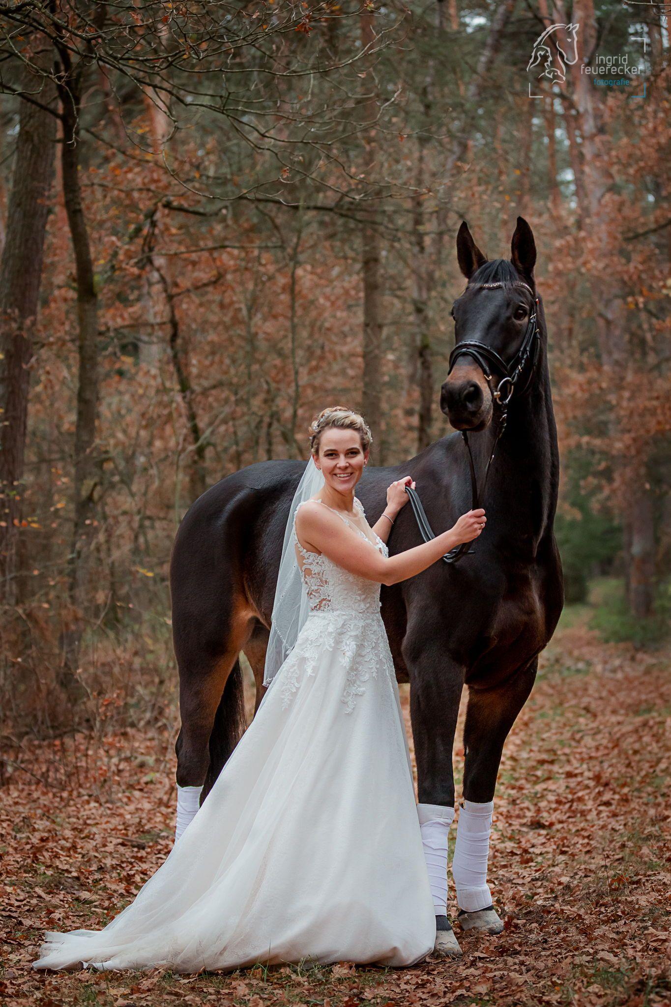 Avalon Equine Photography