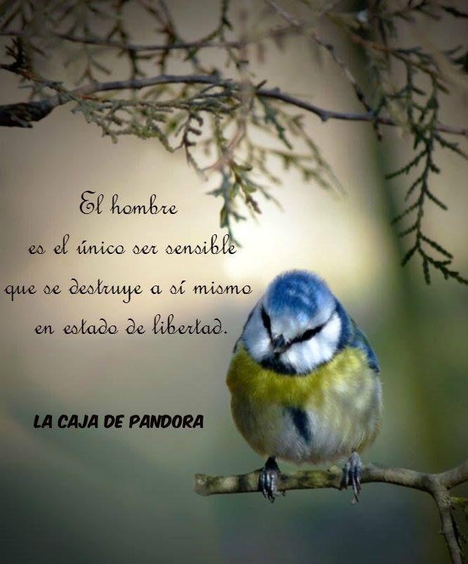 Frases La Caja De Pandora Biblia Proverbios Sabiduria De Dios Y