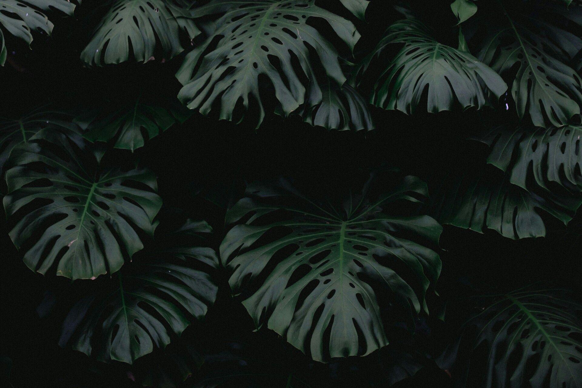 Pin By Restless Witch On Dark Shadows Plant Wallpaper Dark Wallpaper Aesthetic Desktop Wallpaper