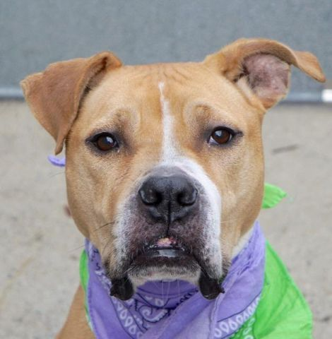 Melanie A1098794 Manhattan Please Share To Be Destroyed 12 15 16 O Public List A Volunteer Writes One Can Not Miss The B Dog Daily Posts Dog Illnesses Dog Bike Carrier Pitbull Terrier
