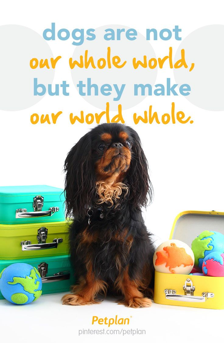 Dogs are not our whole world but they make our world