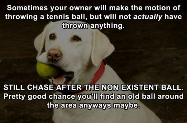 Funny Memes About Life Hacks : Life hacks for dogs lolpic funny videos life