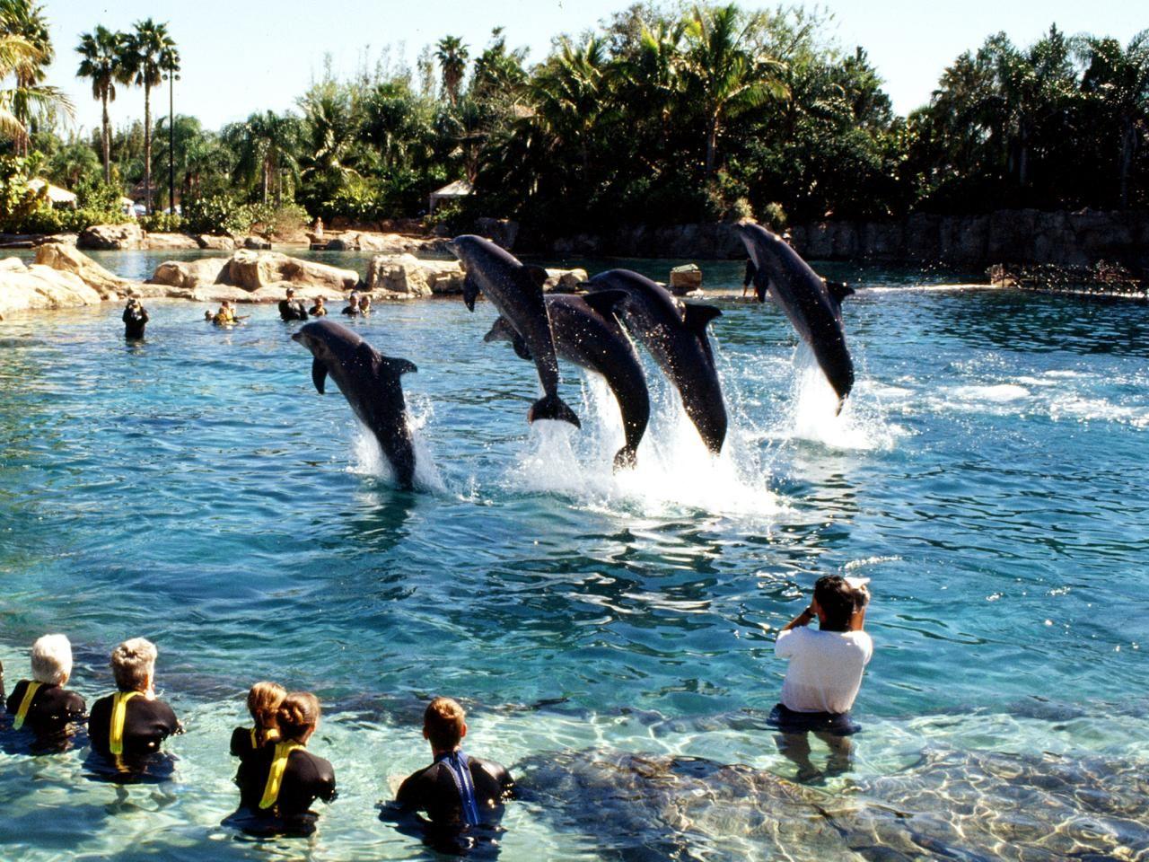 top florida attractions travelchannel com busch gardens tampa