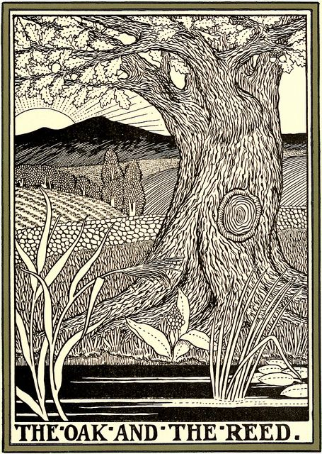 """All sizes   'The Oak and the Reed"""" 1899 (Fables of La Fontaine) - Percy J. Billinghurst   Flickr - Photo Sharing!"""