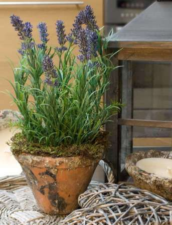 Lavender Terracotta Pot  Would be cute with a pot and moss in the saucer or a moss container