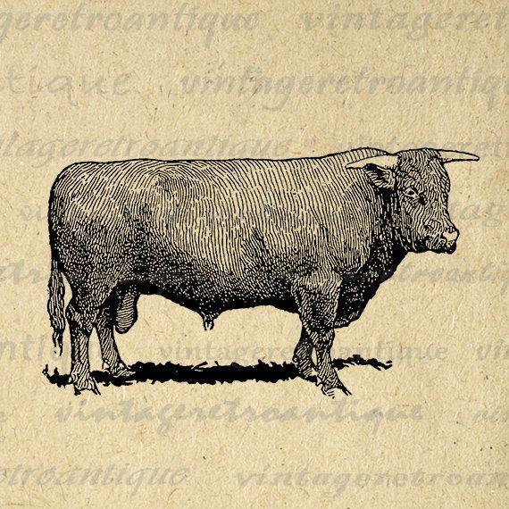 Printable Devon Bull Cow Digital Download Farm Animal Graphic Clip Art Vintage Animal Graphic Vintage Images