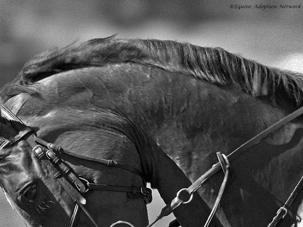 Horse Images for Free Horses, Free horses, Horse background