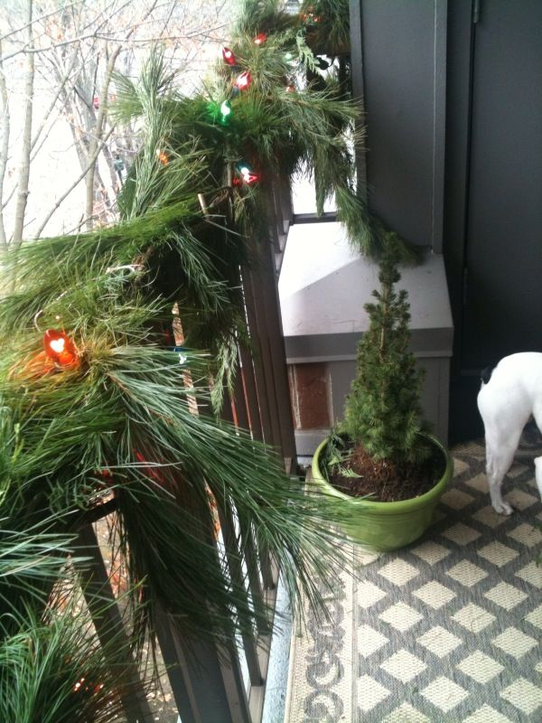 balcony decor (and my favorite pooch).