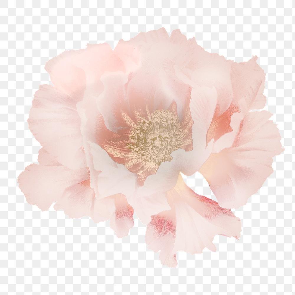 Download Premium Png Of Pink Peony Vintage Illustration Transparent Png Vintage Illustration Flower Illustration Pink Peonies