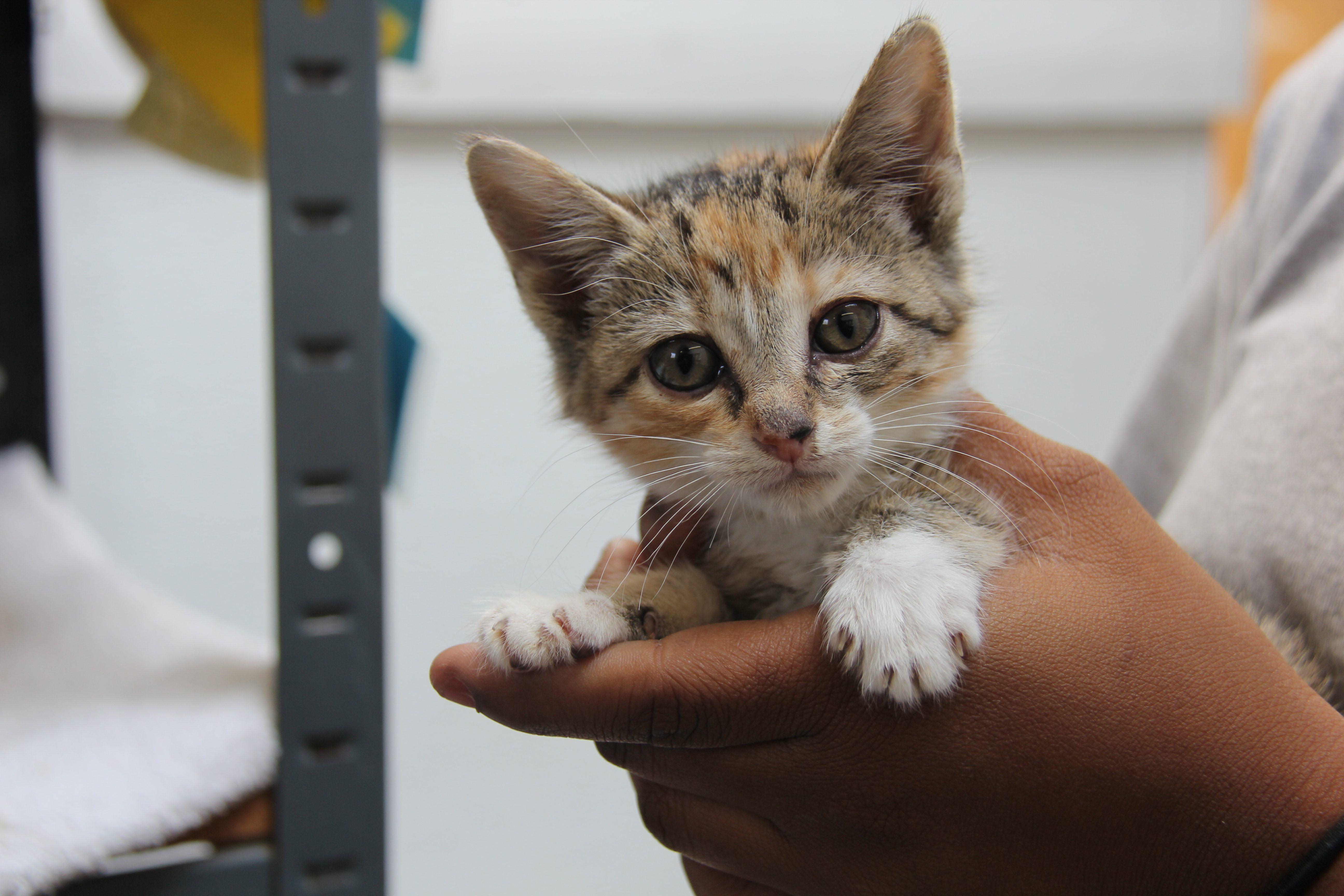 Watch Adorable Kitten Rescued At Border Crossing Hayvanlar Yavru Kediler