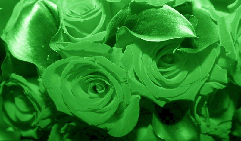 Flowers Green Pictures