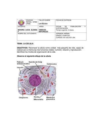 Taller sobre la celula para niños de 4 de primaria | Las celulas ...