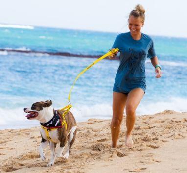 Maui Humane Society Beach Buddy Visitors Program Visitors Can Offer One Of Our Chosen Beach Buddies A Day Of Fu Maui Beach Travel Hawaii Maui Maui Travel