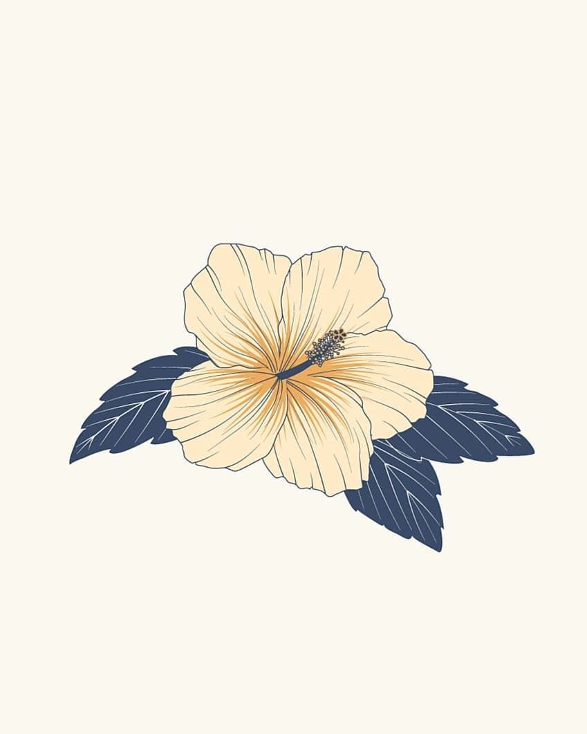 Hibiscus Illustration Drawing Wallpaper Graphic Illustration Illustration