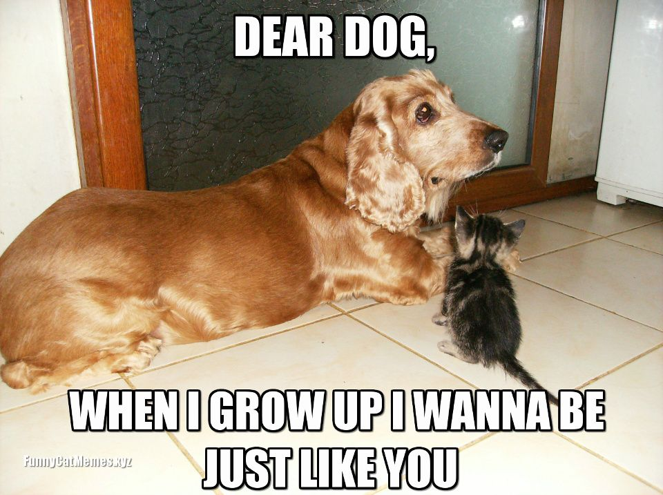 Fun Dog Meme : Image result for funny cat and dog memes animal pinterest
