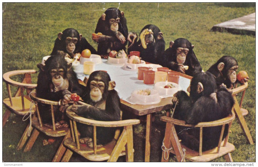 Image result for funny chimps tea party