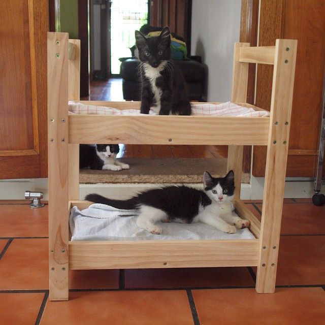 the kitty bunk bed is complete cat dog beds pinterest bunk bed