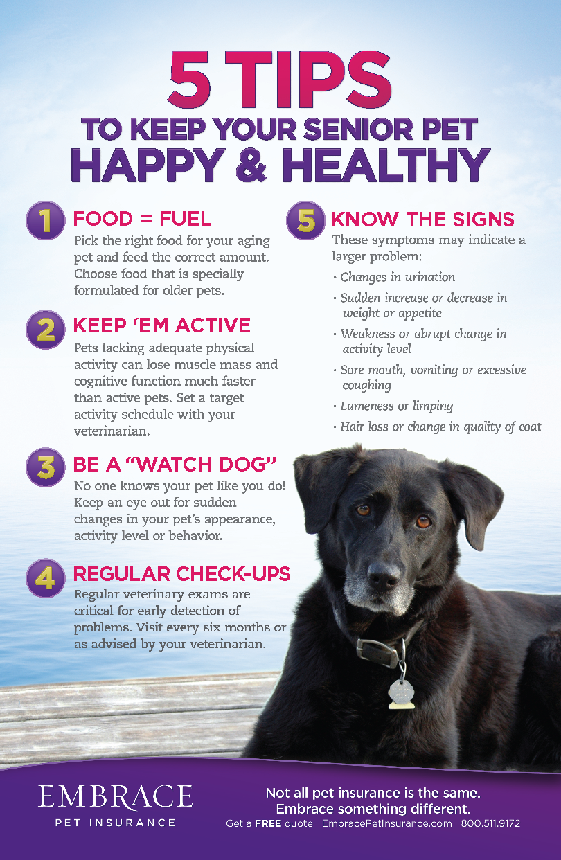 Do You Have A Senior Pet Be Sure You Are Giving Him The Love And Care He Needs For More Pet Advice And Articles Click The Image Pet Health Dog Health