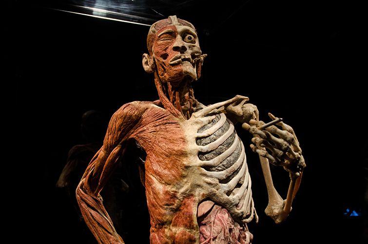 BodyWorlds #discoveryts | Body Worlds | Body anatomy, Human