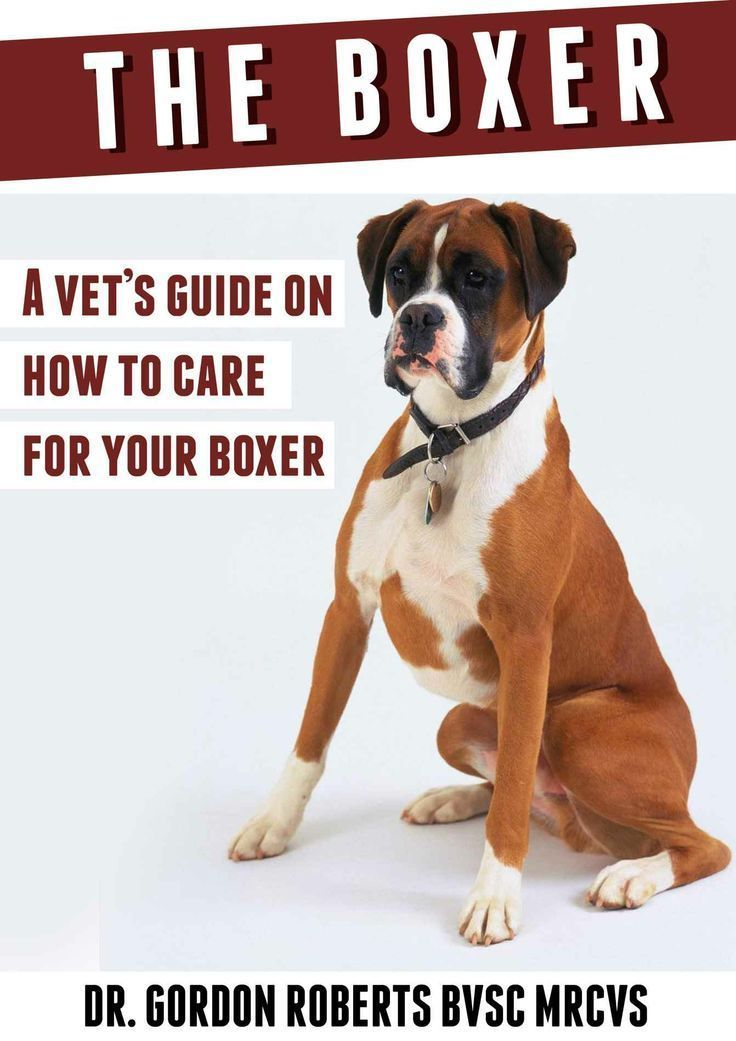 The Boxer Dog A Vet's Guide on How to Care for Your Boxer